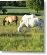 Summer Grazing Metal Print