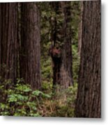 Summer In Redwood National Park Vertical Metal Print