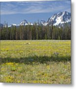 Summer In The Sawtooths Metal Print