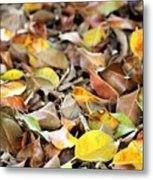 Summer Leaves For Fall Metal Print