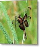 Summer Dragonfly Metal Print