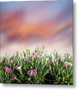 Summer Meadow Flowers In Grass At Sunset. Metal Print