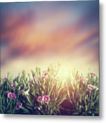 Summer Meadow Flowers In Grass At Sunset. Vintage Metal Print