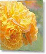 Golden Yellow Roses In The Garden Metal Print