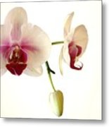 Summer Orchids Metal Print