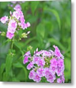 Summer Purple Flower Metal Print