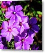 Summer Purple Phlox Metal Print