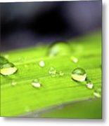 Summer Rain 2 Metal Print