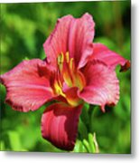 Summer Red Lily Metal Print
