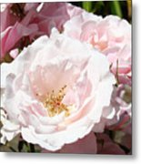 Summer Rose Garden Pink Flowers Baslee Troutman Metal Print