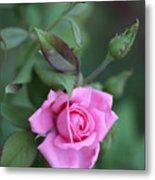 Summer Sweet Rose Metal Print
