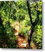 Summer Trail  Metal Print