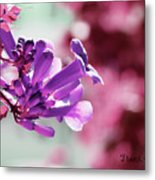 Summer Vine Metal Print