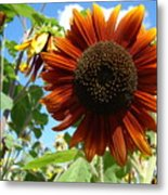 Summers Here Metal Print