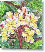 Summertime Kauai Island Plumeria Watercolor By Jenny Floravita Metal Print