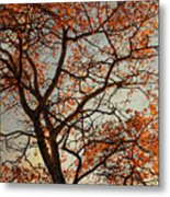 Summing Nature Call  Metal Print