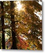 Sun And Autumn Metal Print