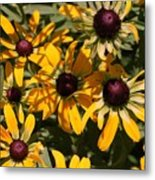Sun And Shade Metal Print by Jame Hayes