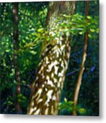 Sun And Shadow Patterns Metal Print