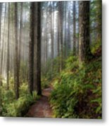 Sun Beams Along Hiking Trail In Washington State Park Metal Print