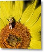 Sun Bee Metal Print
