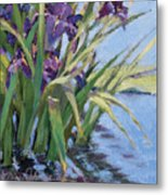 Sun Day - Iris In A Pond Metal Print