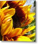 Sun Fire Flower Metal Print
