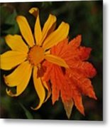Sun Flower And Leaf Metal Print