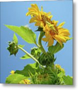 Sun Flower Artwork Sunflower 5 Giclee Art Prints Baslee Troutman Metal Print