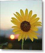 Sun Flower At Sunset Metal Print