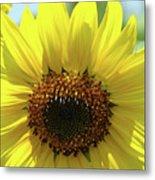 Sun Flower Glow Art Print Summer Sunflowers Baslee Troutman Metal Print
