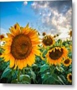 Sun Flower Glow Metal Print