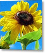 Sun Flower - Id 16235-142741-1520 Metal Print