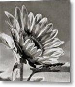 Sun Flower - Id 16235-142753-8673 Metal Print