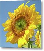 Sun Flowers Garden Art Prints Baslee Troutman Metal Print