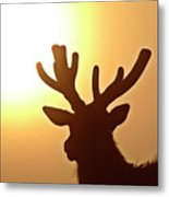 Sun Glaring Over A Bull Elk Metal Print