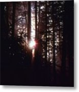Sun In The Forest  Metal Print