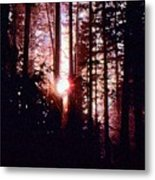 Sun In The Forest Two  Metal Print