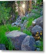 Sun In The Sequoias Metal Print