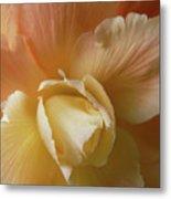 Sun Kissed Begonia Flower Metal Print