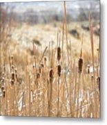 Sun Kissed Cattails - Casper Wyoming Metal Print