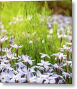 Sun-kissed Meadows With White Star Flowers Metal Print