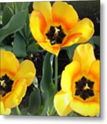 Tulips Kissed By The Sun Metal Print
