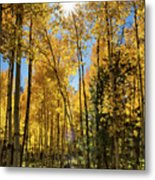 Sun Peaking Through The Aspens  Metal Print