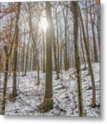 Sun Peaking Through The Trees - Fairmount Park Metal Print