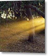 Sun Rays 2 Metal Print