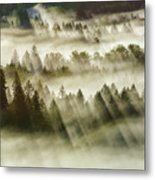 Sun Rays Over Foggy Oregon Forest Metal Print