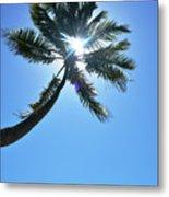 Sun Rays Through A Tall Palm Tree Metal Print