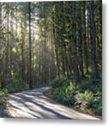 Sun Rays Through The Forest Metal Print