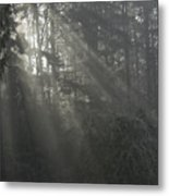 Sun Rays Through The Trees On A Foggy Winter Day Metal Print